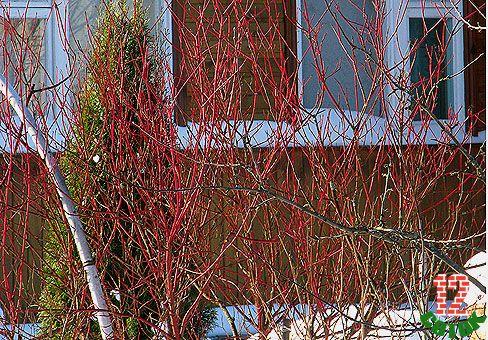Зимние картины сада листопадные с